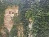 Zieleń na cmenatarzu Nowina