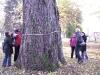 Zajęcia terenowe - identyfikacja drzew zagrażających bezpieczeństwu